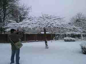 A photo of V taking a photo of a snow laden tree in North London