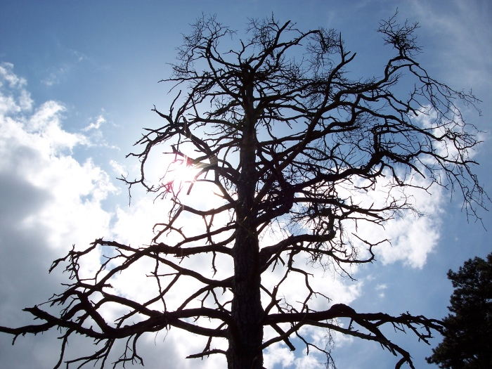 Tree, Thetford