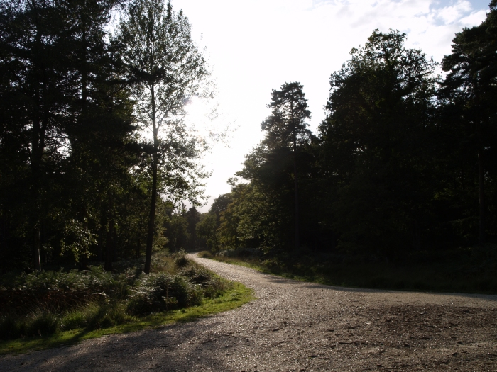Walking from Lyndhurst to Brokenhurst, New Forest